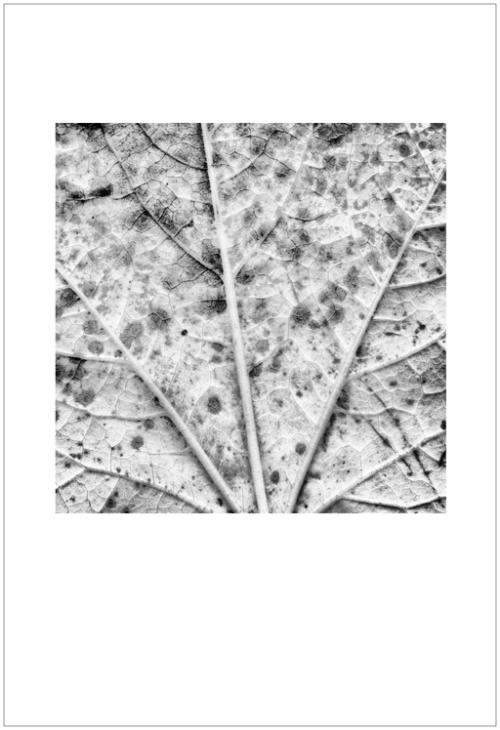 leaves-ligue1