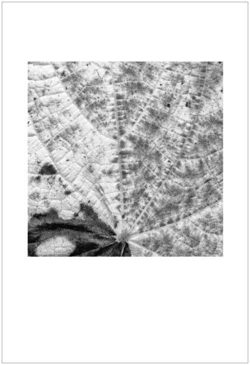 leaves-ligue2