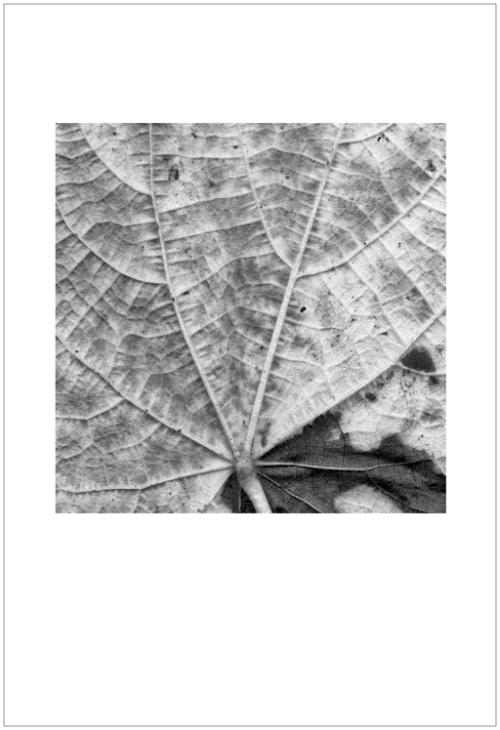 leaves-ligue3