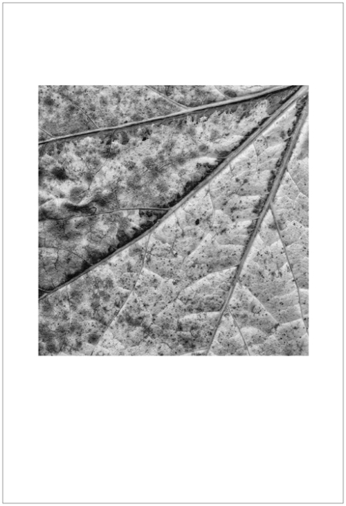 leaves-ligue4