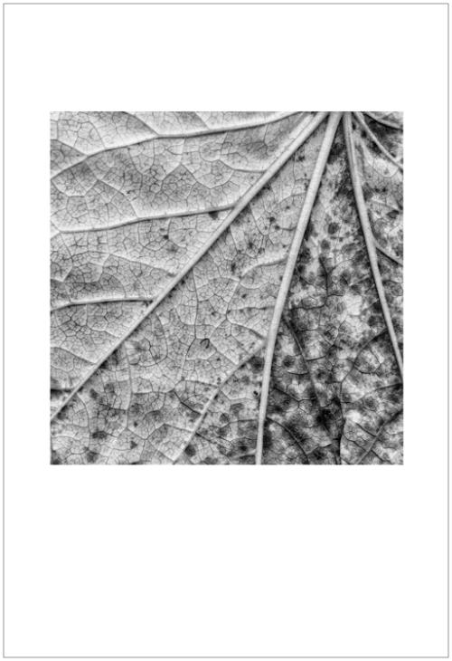 leaves-ligue6