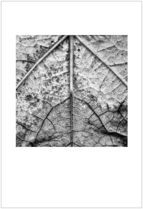 leaves-ligue7