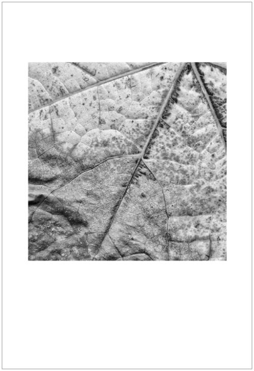 leaves-ligue8